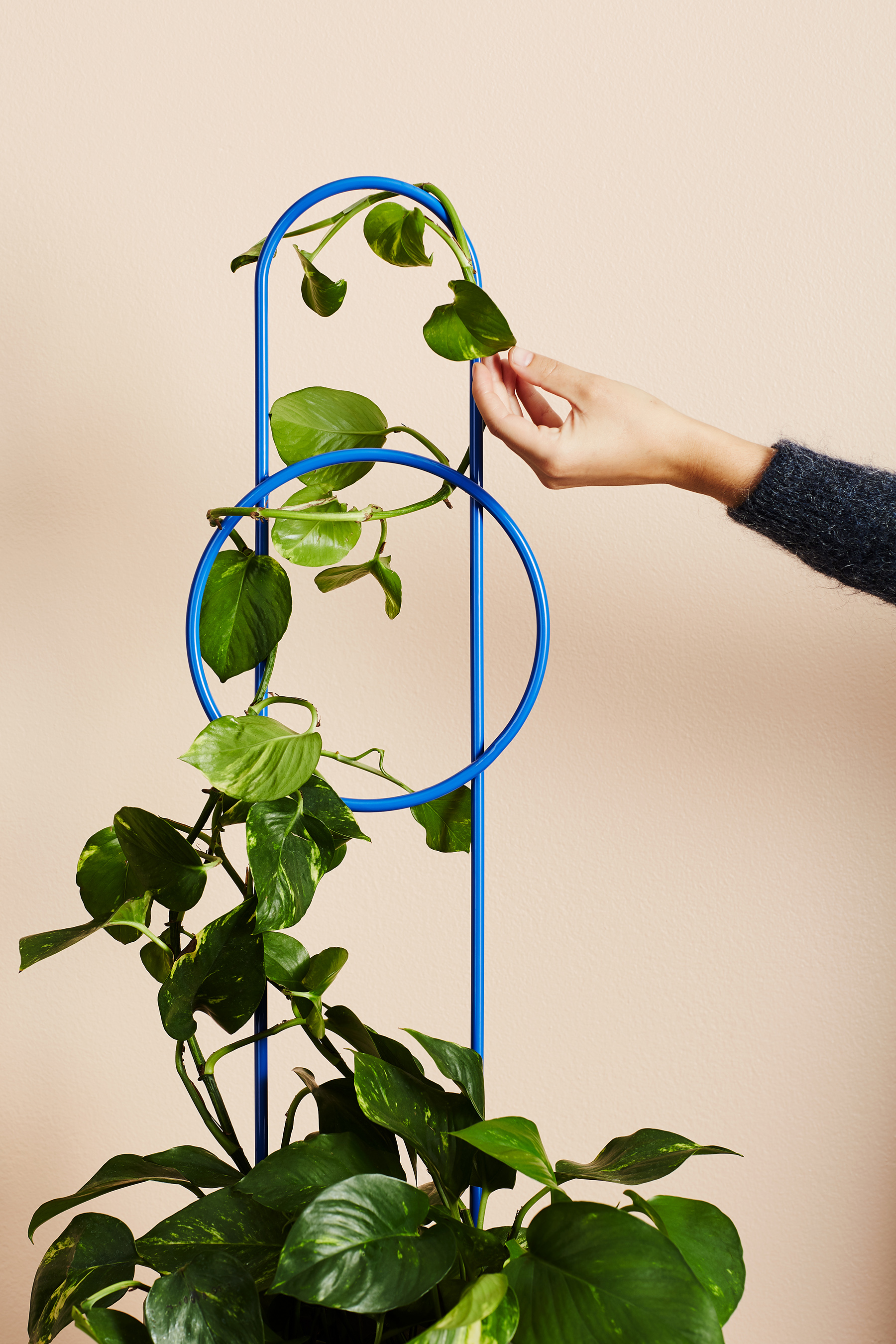 Ivy Muse Dot plant stake