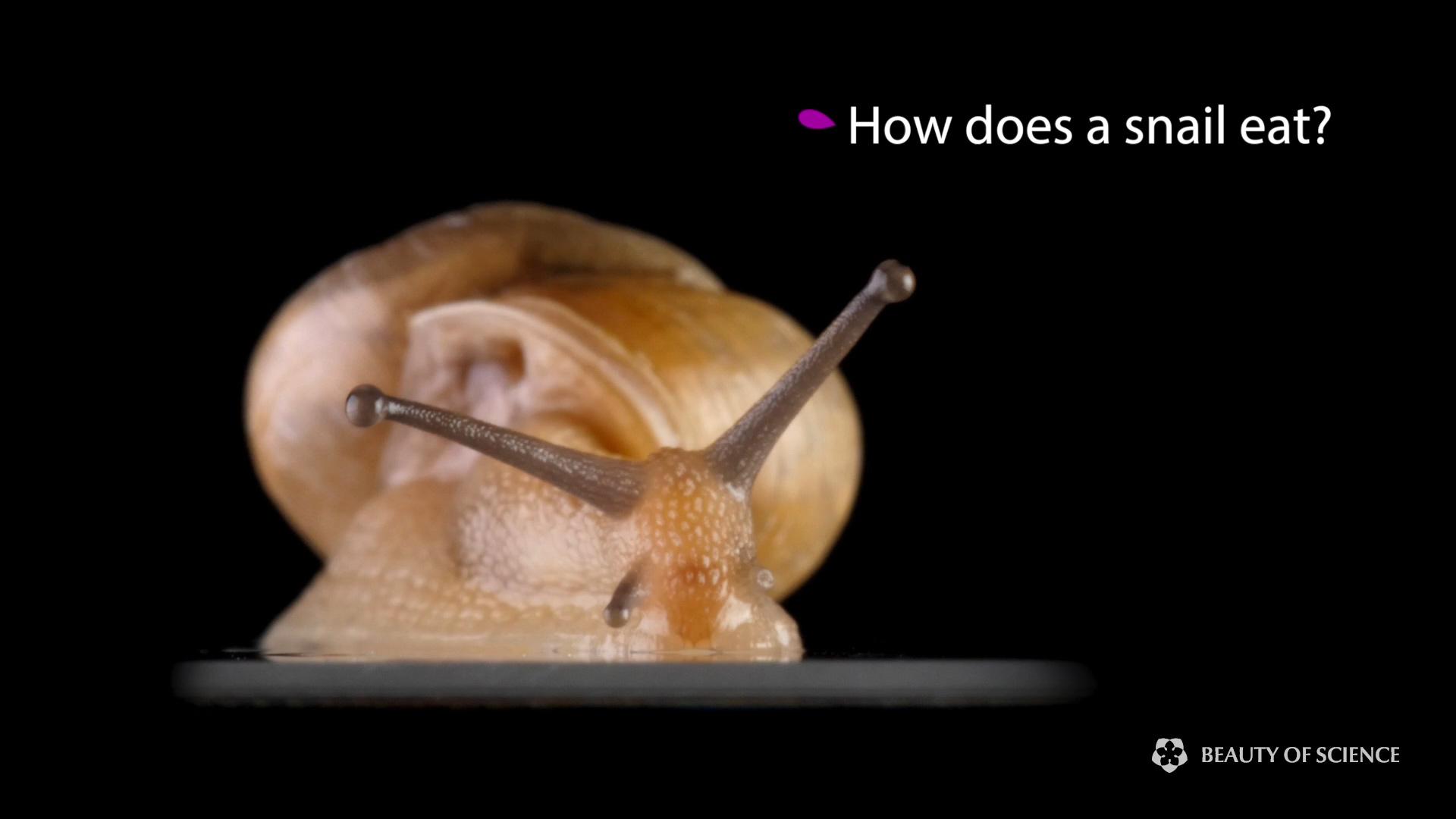 1 snail.jpg
