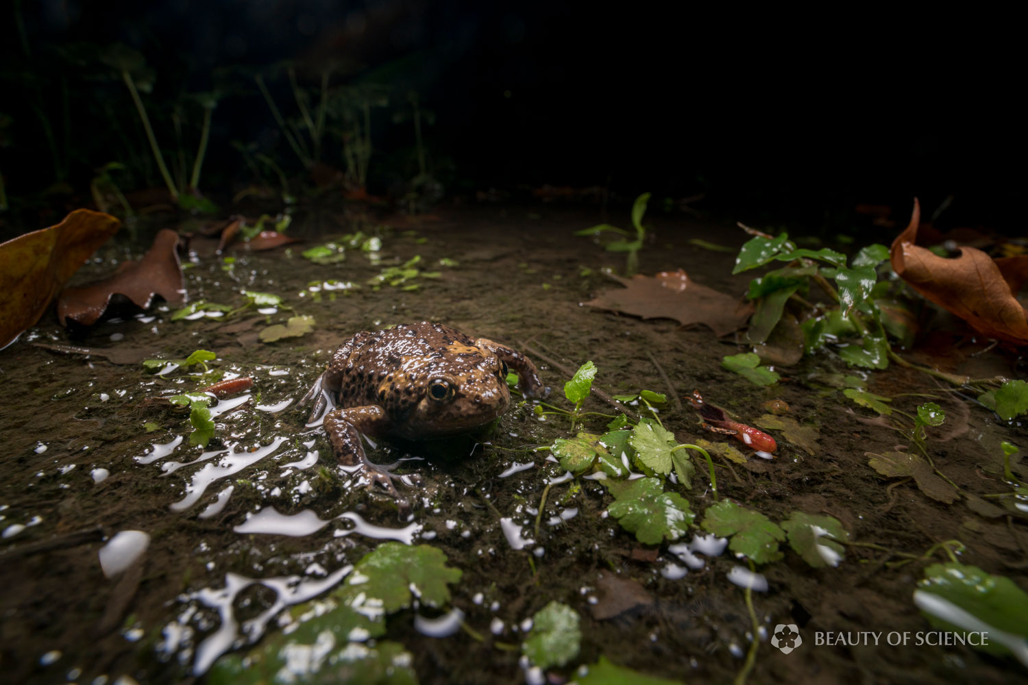 sichuan-narrow-mouthed-frog-habitat-07.jpg