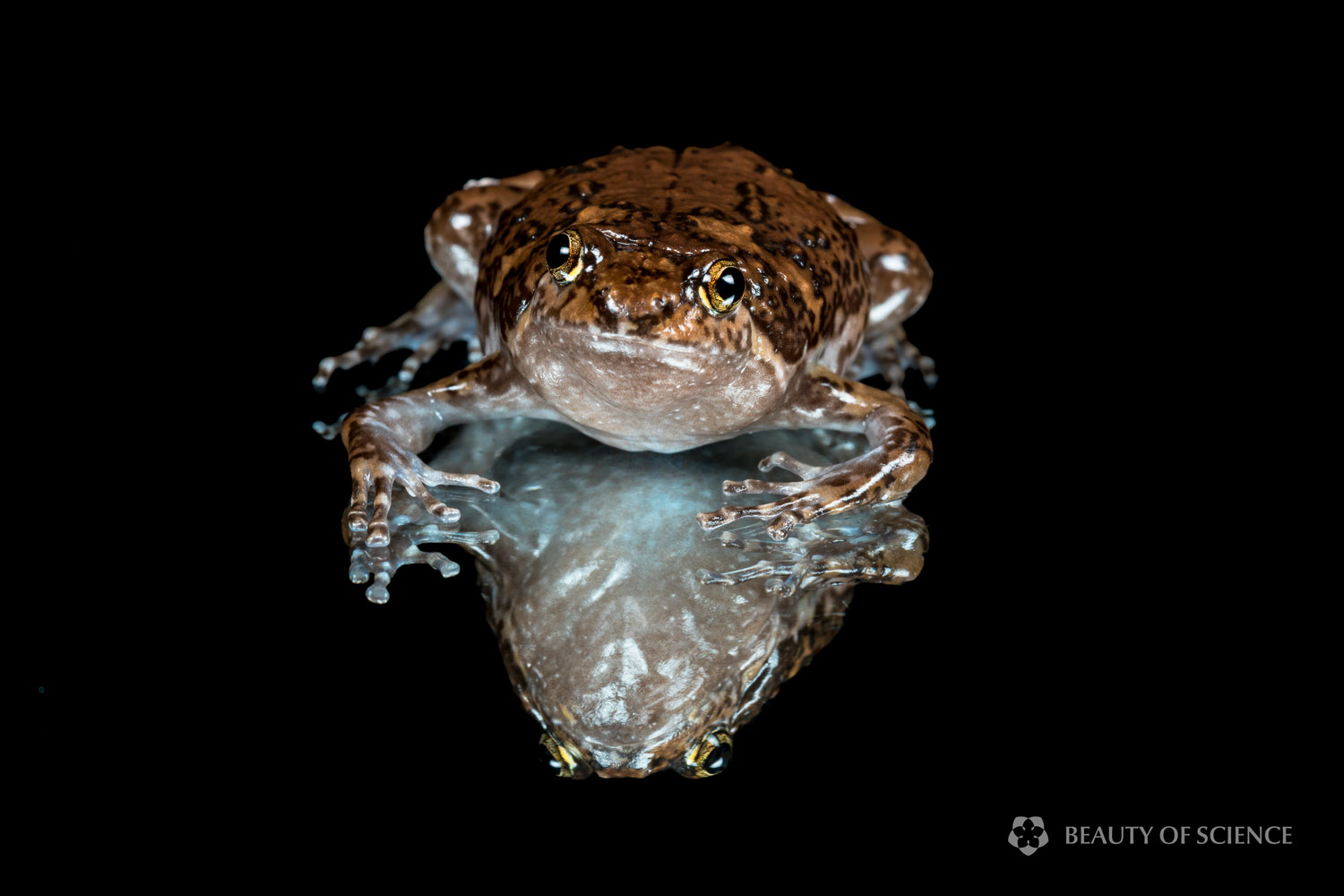 sichuan-narrow-mouthed-frog-art-06.jpg