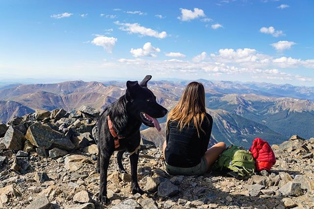 Our four-legged compadre bagged her first 14'er yesterday! Pretty sure she cared more about jerky treats and chasing pikas than the actual summit, but hey, this pup can move! ⛰🐺💨#bajadogdoesmountains