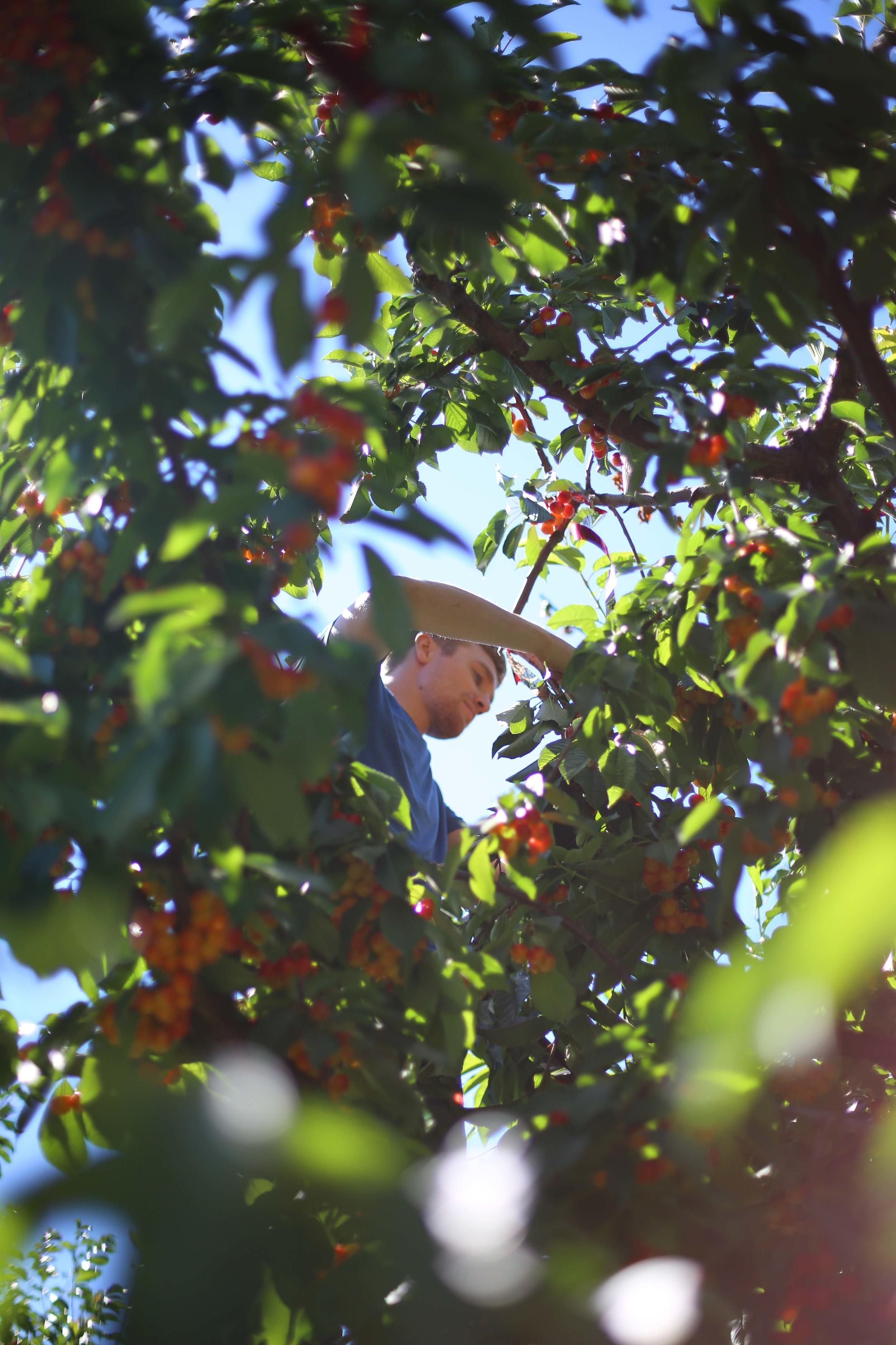 U-pick Farm-98.jpg