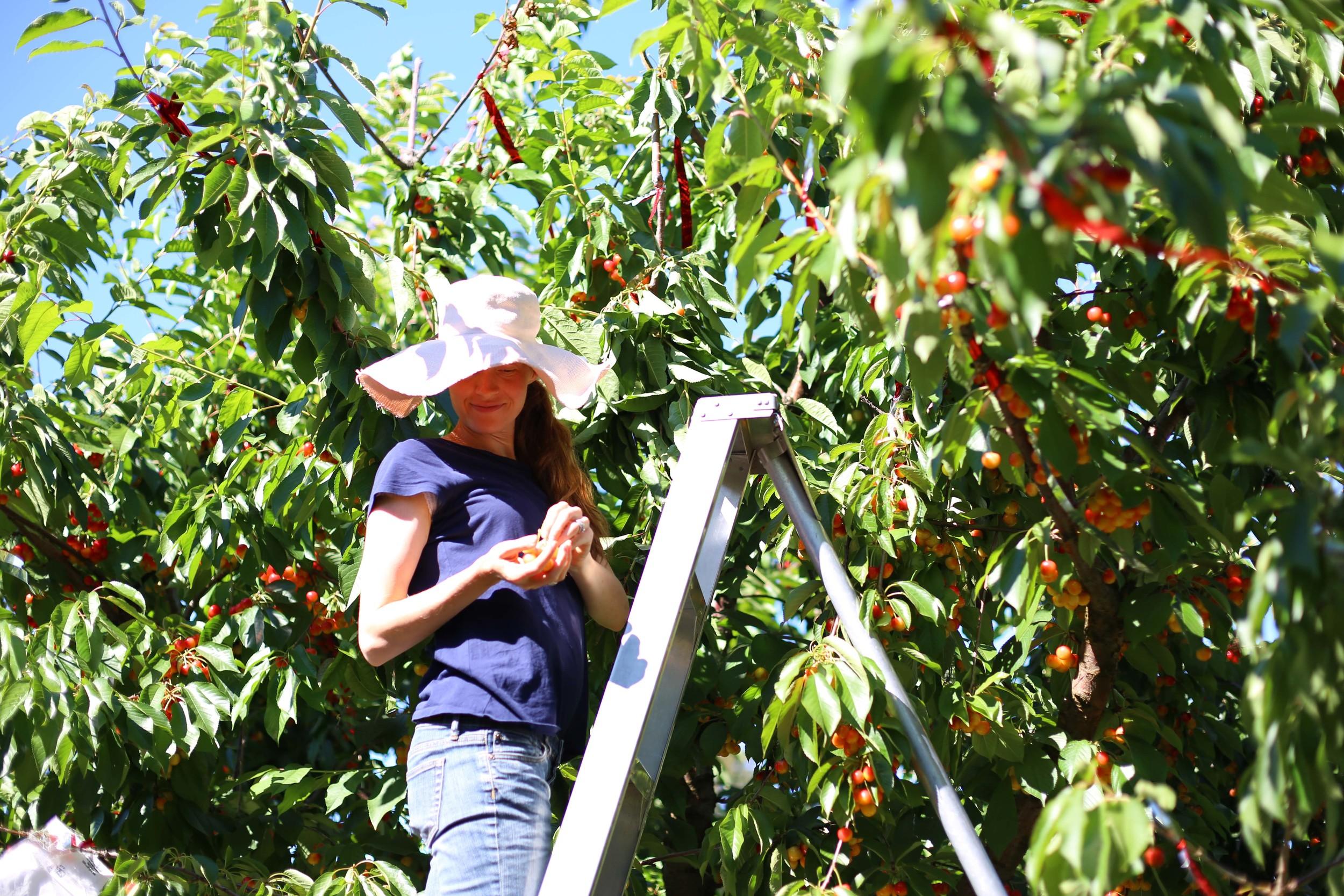 U-pick Farm-143.jpg