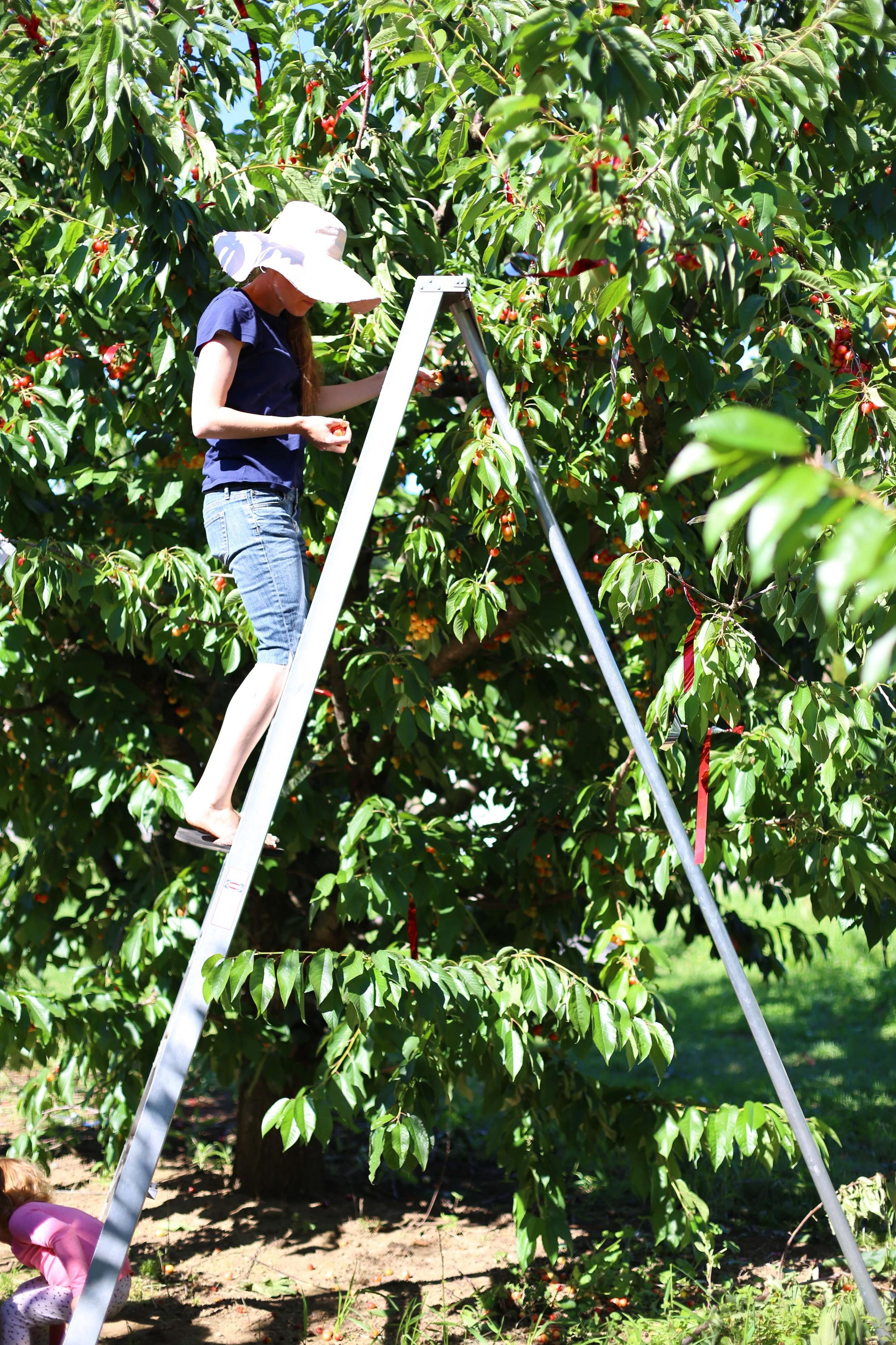 U-pick Farm-145.jpg