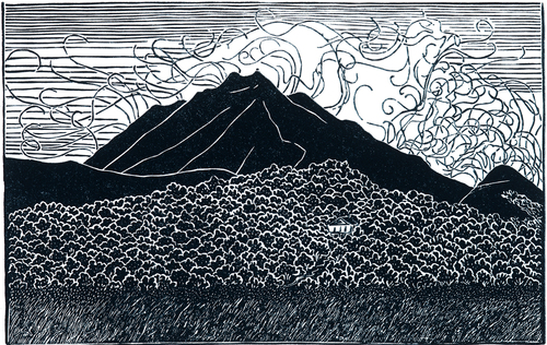 Mt. Tamalpais from the Old County Dump