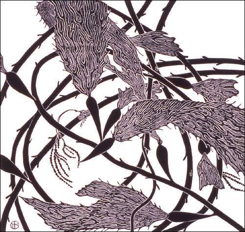 Red Kelp