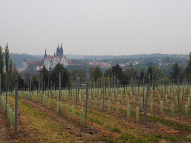 Schloss-Proschwitz winery in Meissen, Saxony