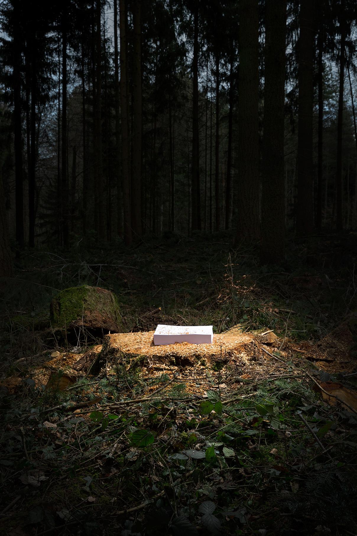Rueedi-Luca-environmental-project-tree-paper.jpg