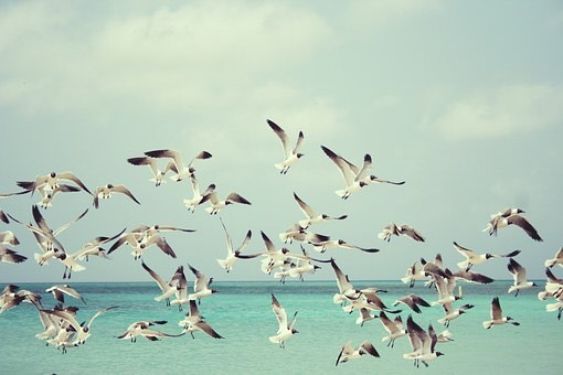 Flock to our SUMMER SALE  40% off - use HEATWAVE code at checkout #nardisbeach #swimwearsale #designerswimwear
