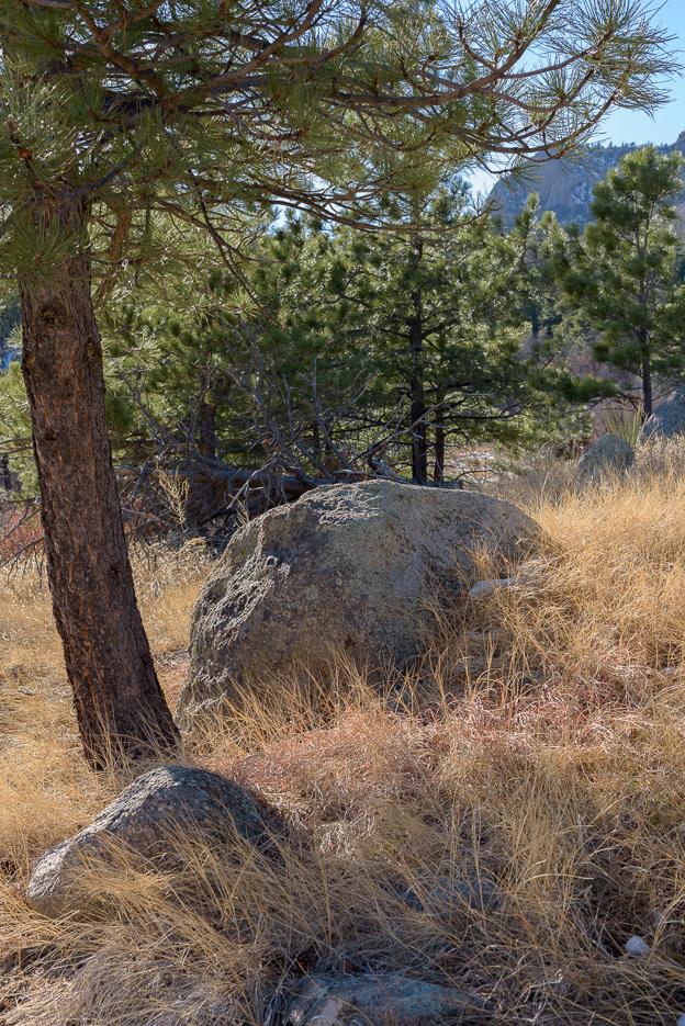 That's some good lookin' lichen