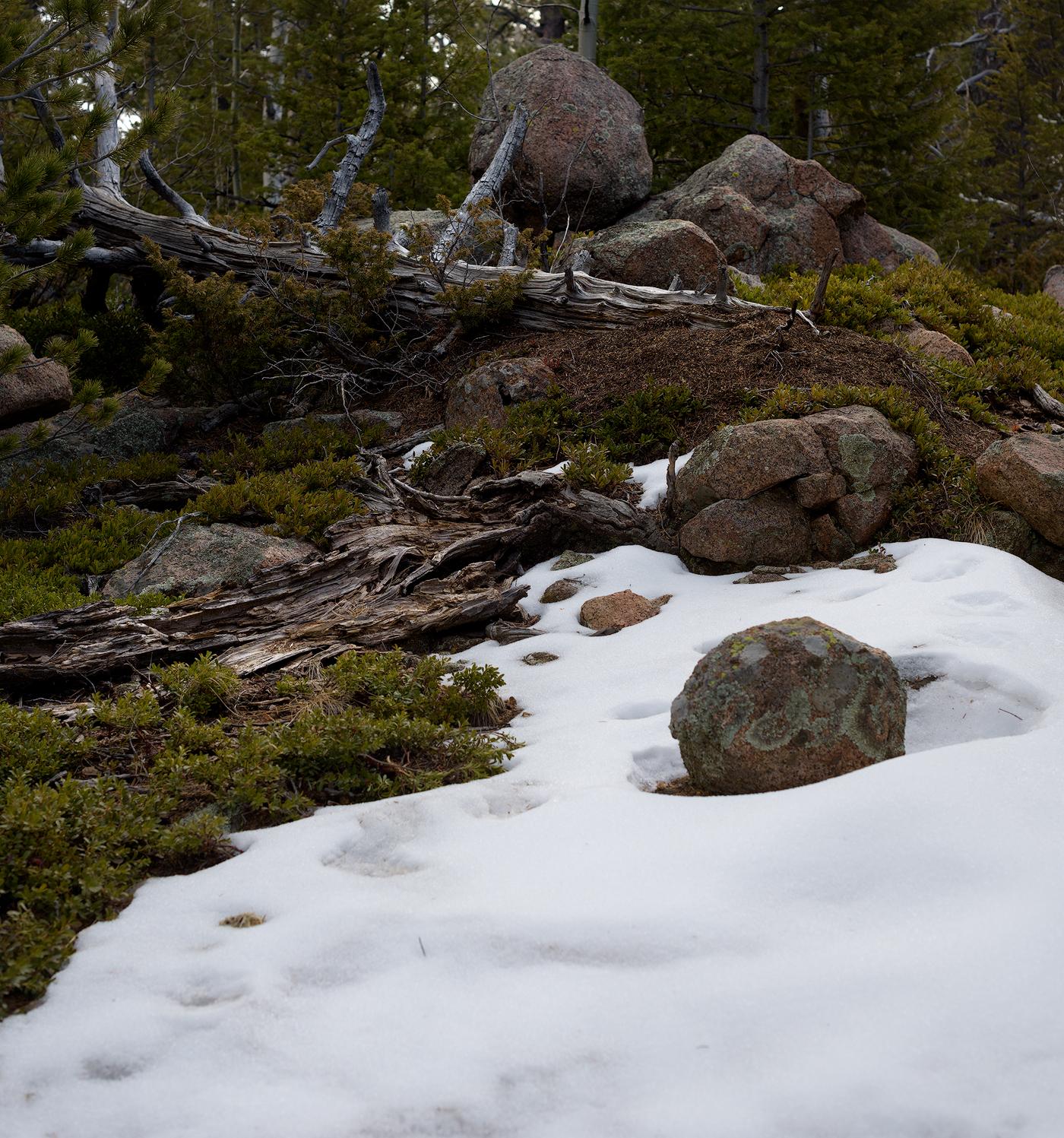 Mountain top rock garden