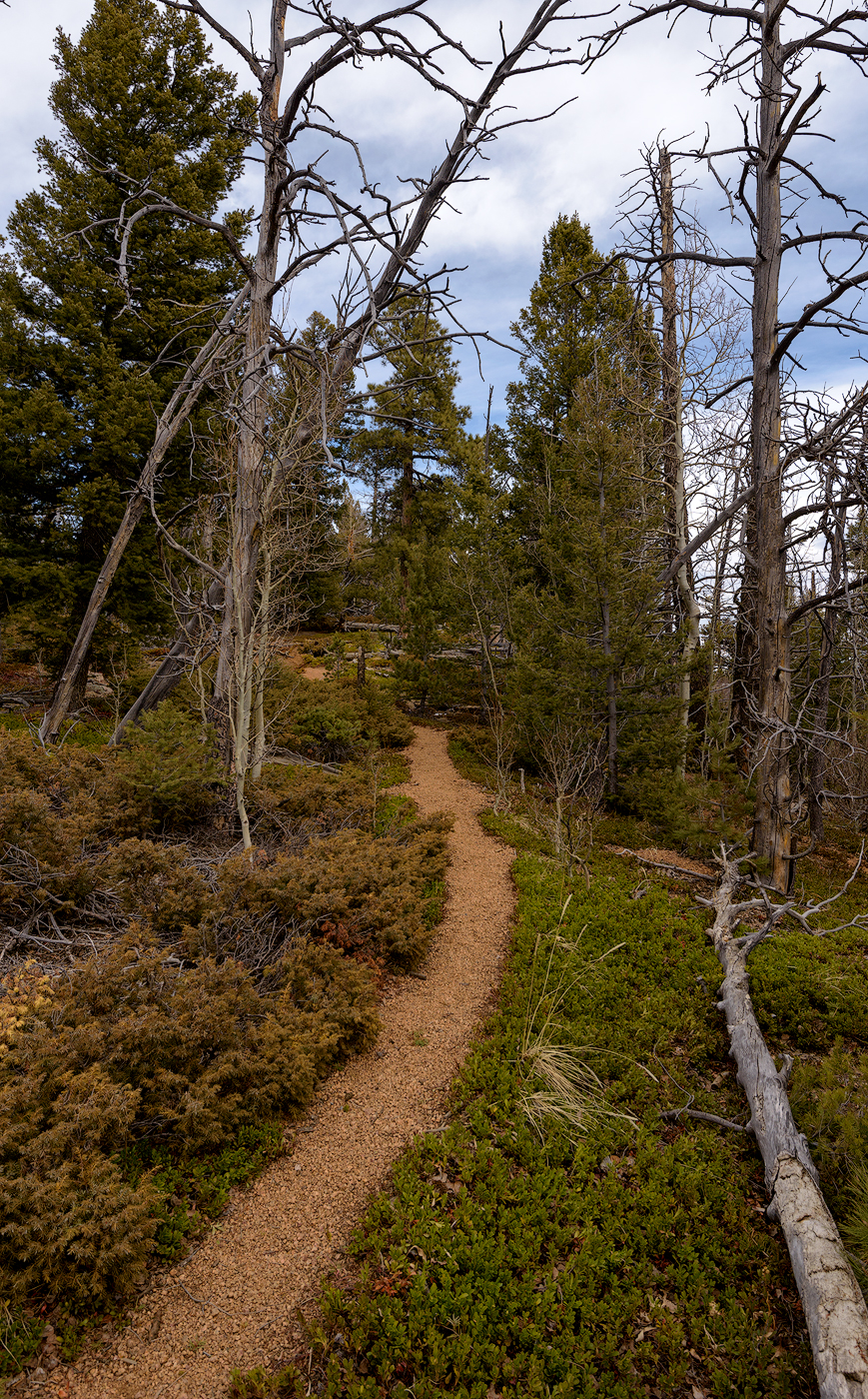 My favorite, pebbly granite (technical term) trails