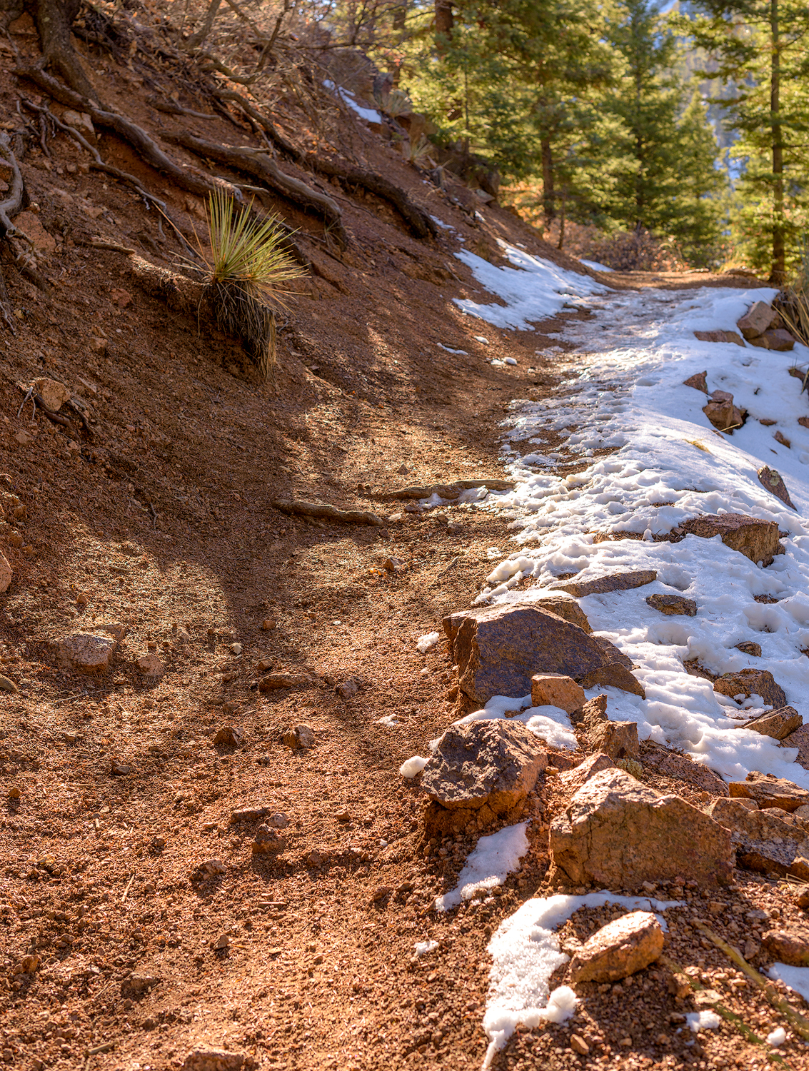BTP_NCC_Upper_Columbine_Trail_2.jpg