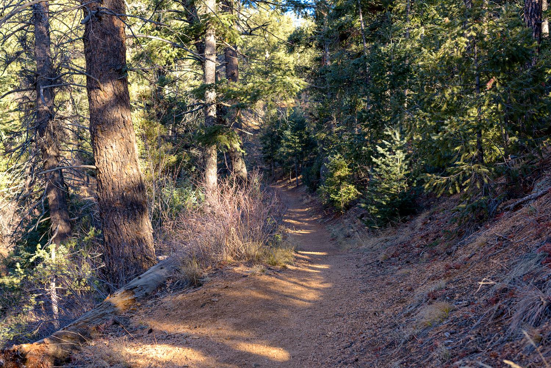 BTP_NCC_Middle_Columbine_Trail_9.jpg
