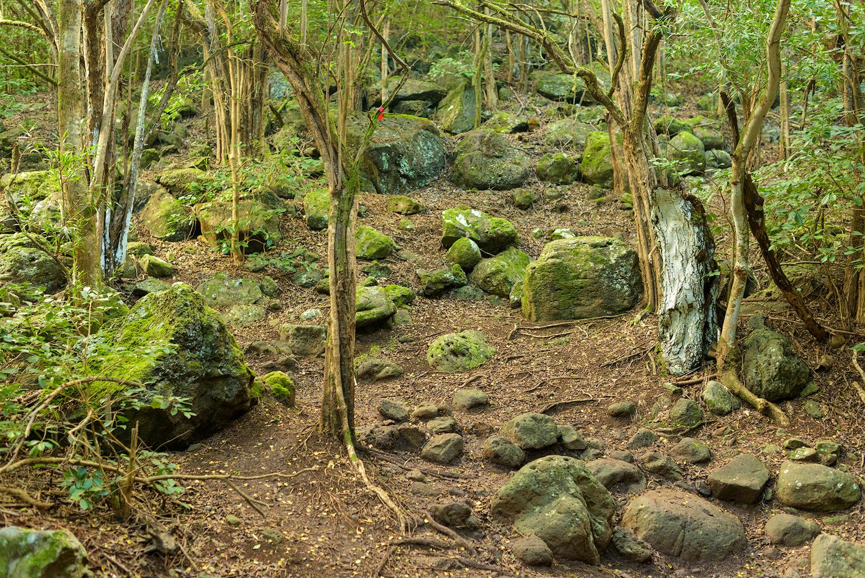BTP_Kuliouou_Ridge_Trail-70.jpg