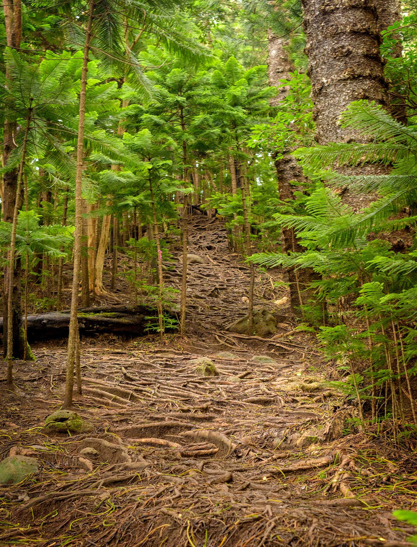BTP_Kuliouou_Ridge_Trail-86.jpg