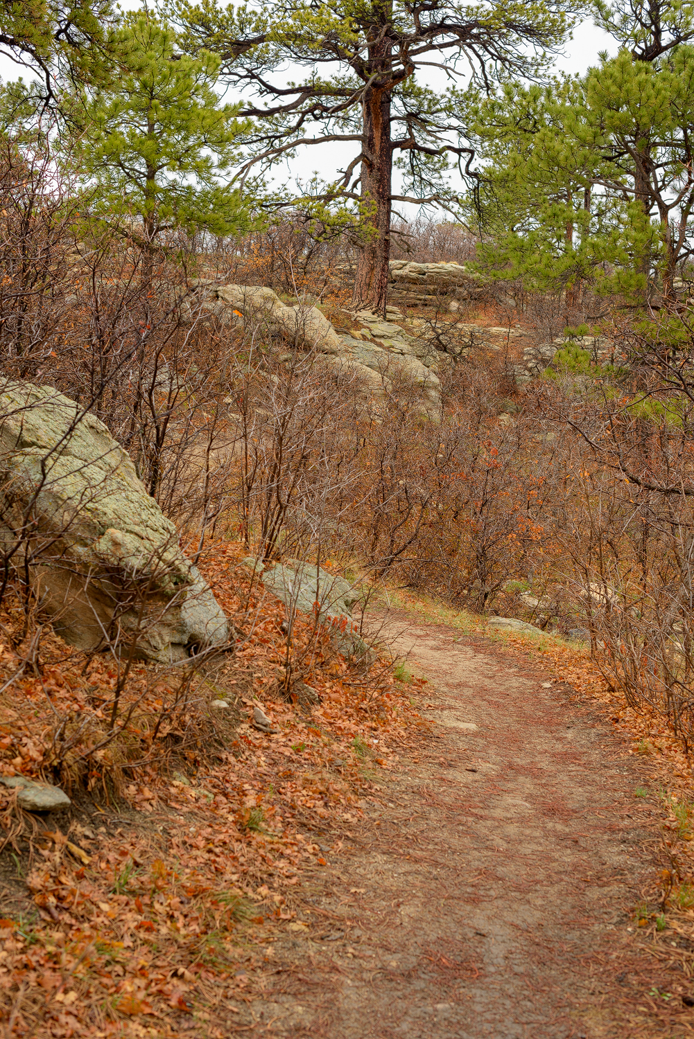 Palmer Divide Ranch Trail | Ryan Stikeleather | Break Trail | Colorado Hiking, Camping, Photography