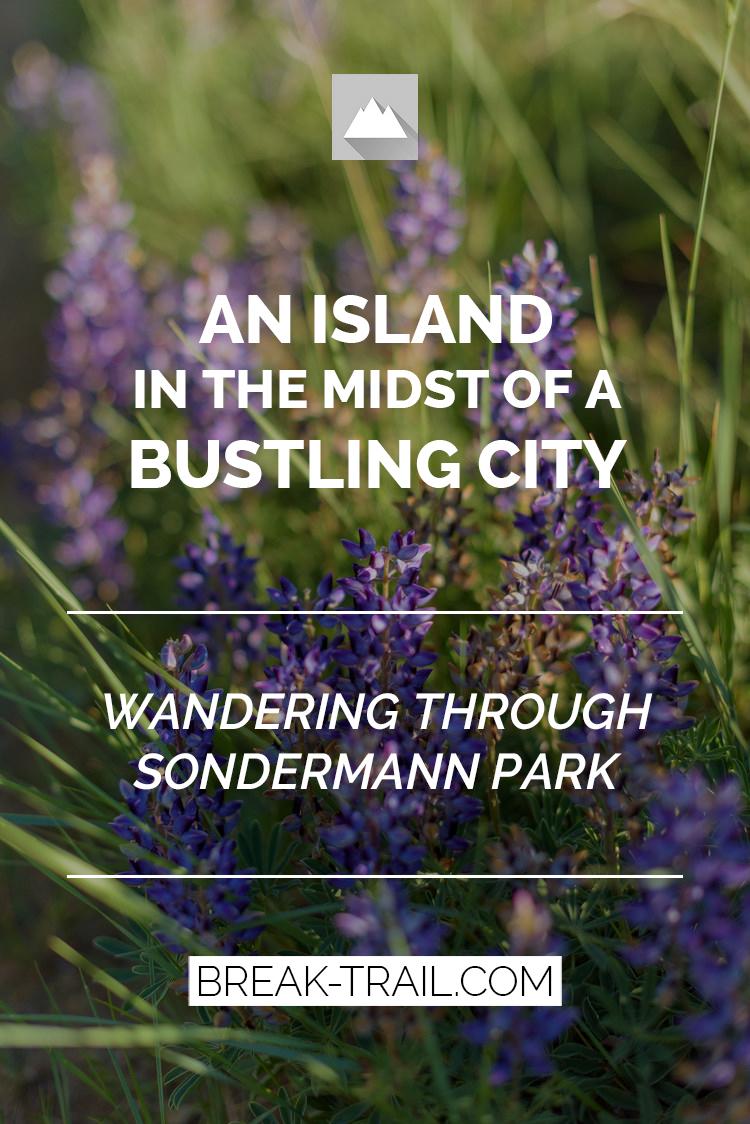 Purple wild flowers soaking up the sun along Western Loop Trail in Sondermann Park