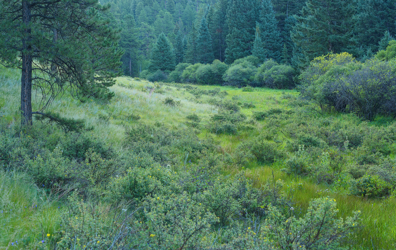Lovell Gulch Trail