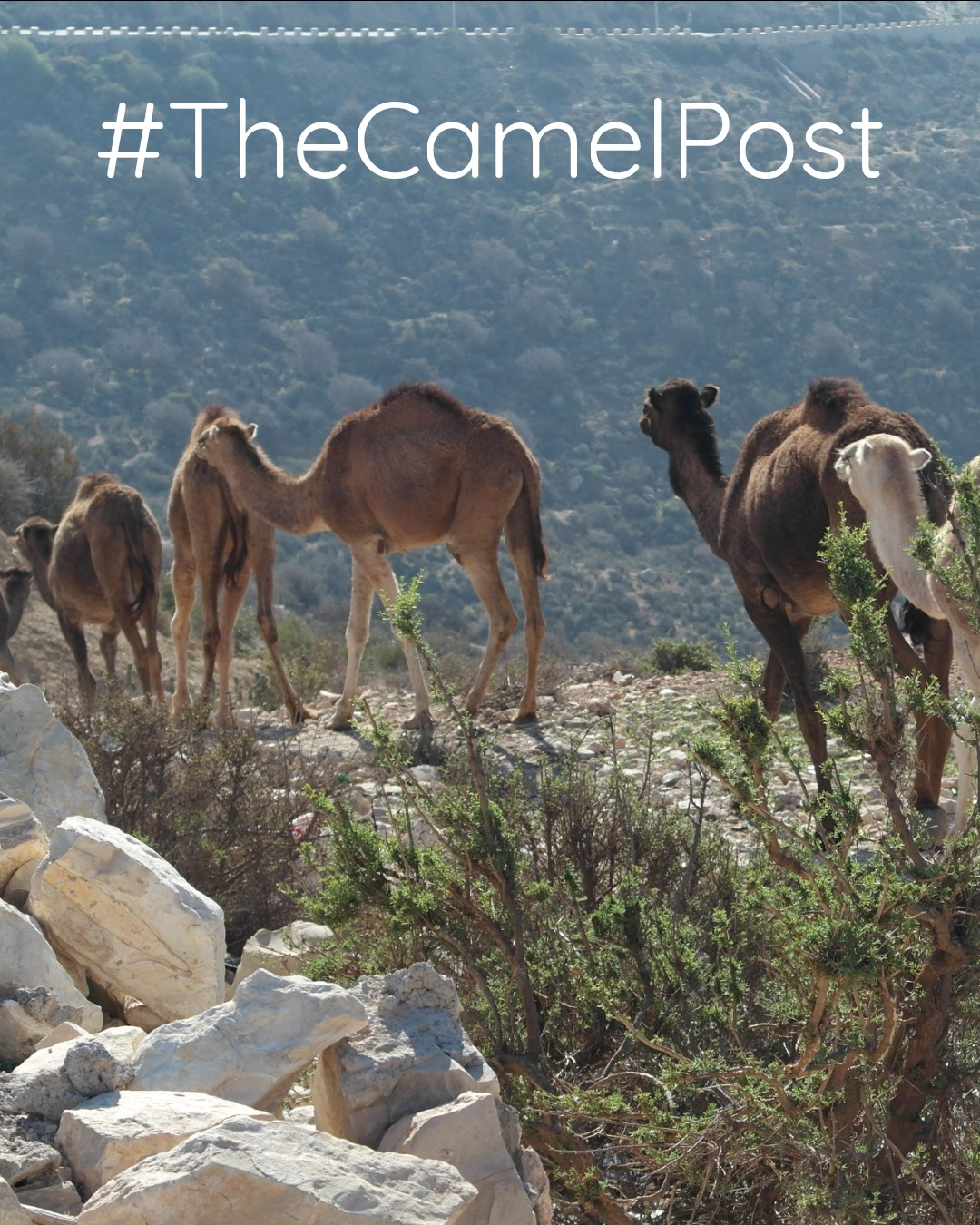 Camels Agadir City Tour