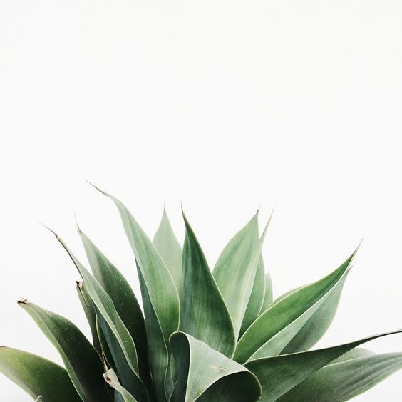Some San Miguel green! #sanmigueldeallende #green #sanmiguelgreen #casabykrista #inspiration #highdessert #happysaintpatricksday #FelizdiadeSanPatricio
