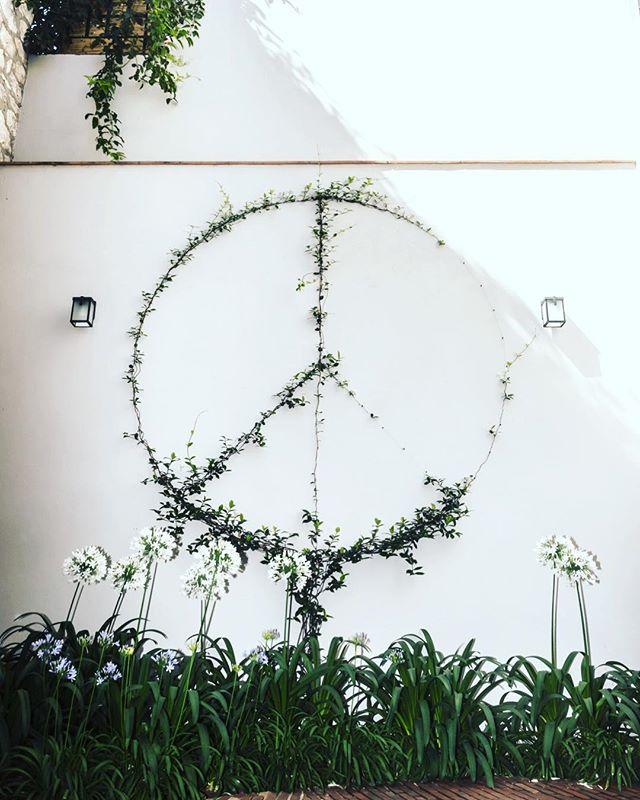In bloom....#sma #sanmigueldeallende #casabykrista #peace #landscapeart #apaganthus #inbloom