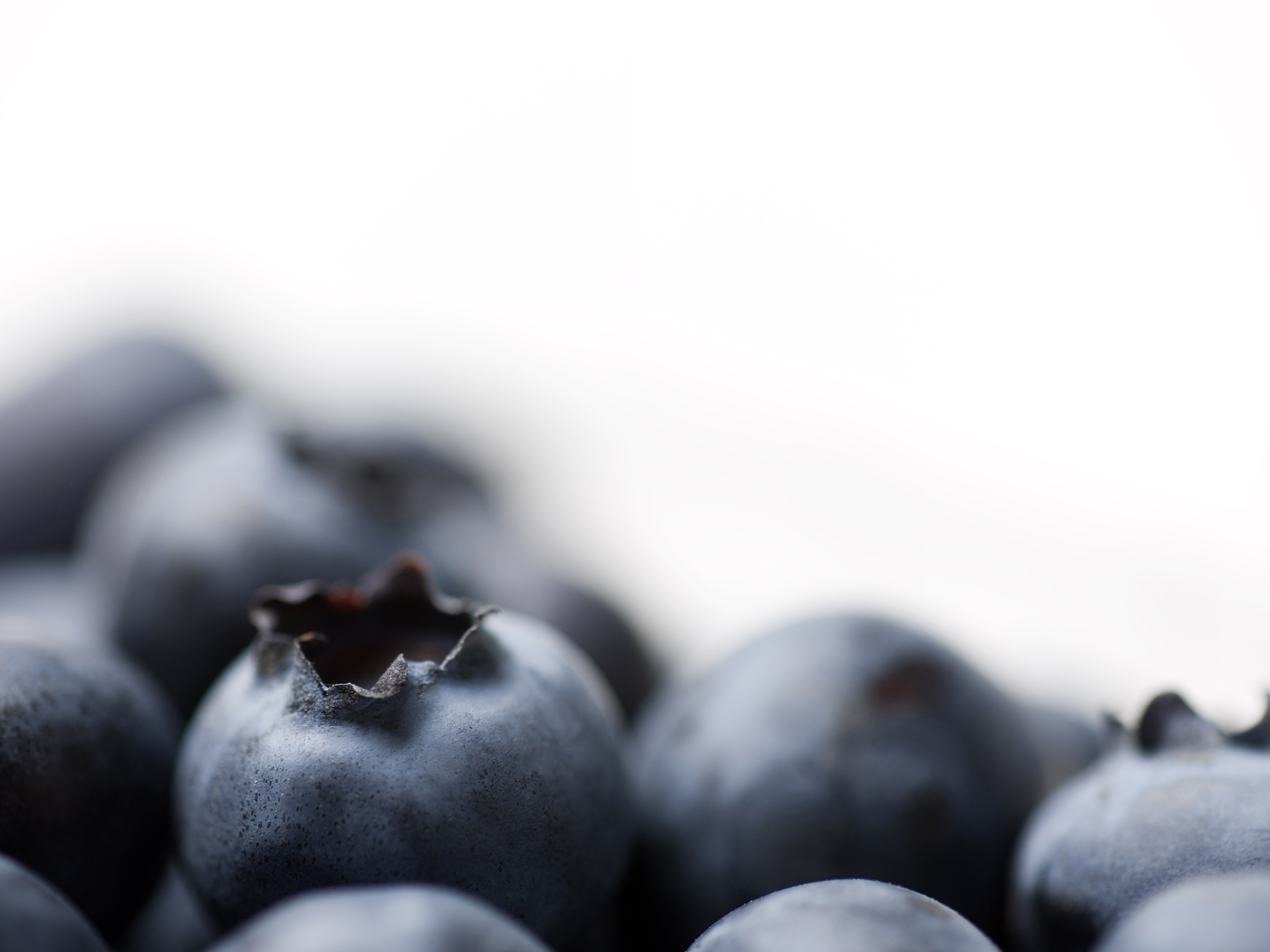 blueberries-studio-photo.jpg