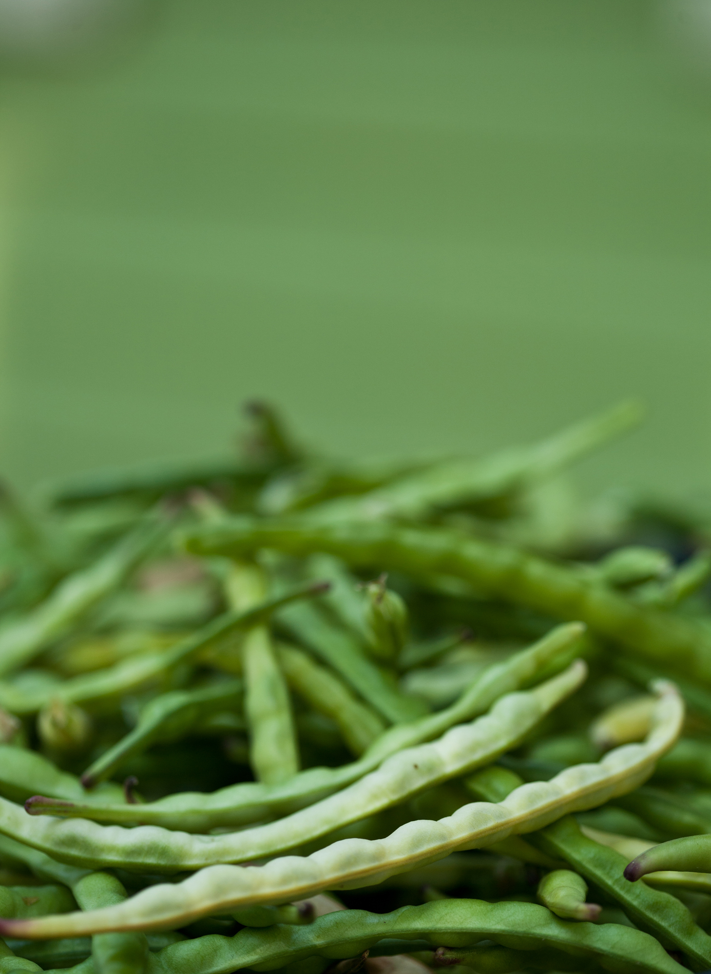 green-beans-stock-photo.jpg