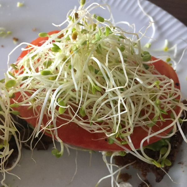 Sprouted Batter Bread toast with avocado, heirloom tomato, goat cheese and sprouts!