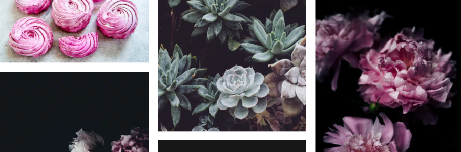 Catherine McGuire Illustrations website design project floral stock image collection