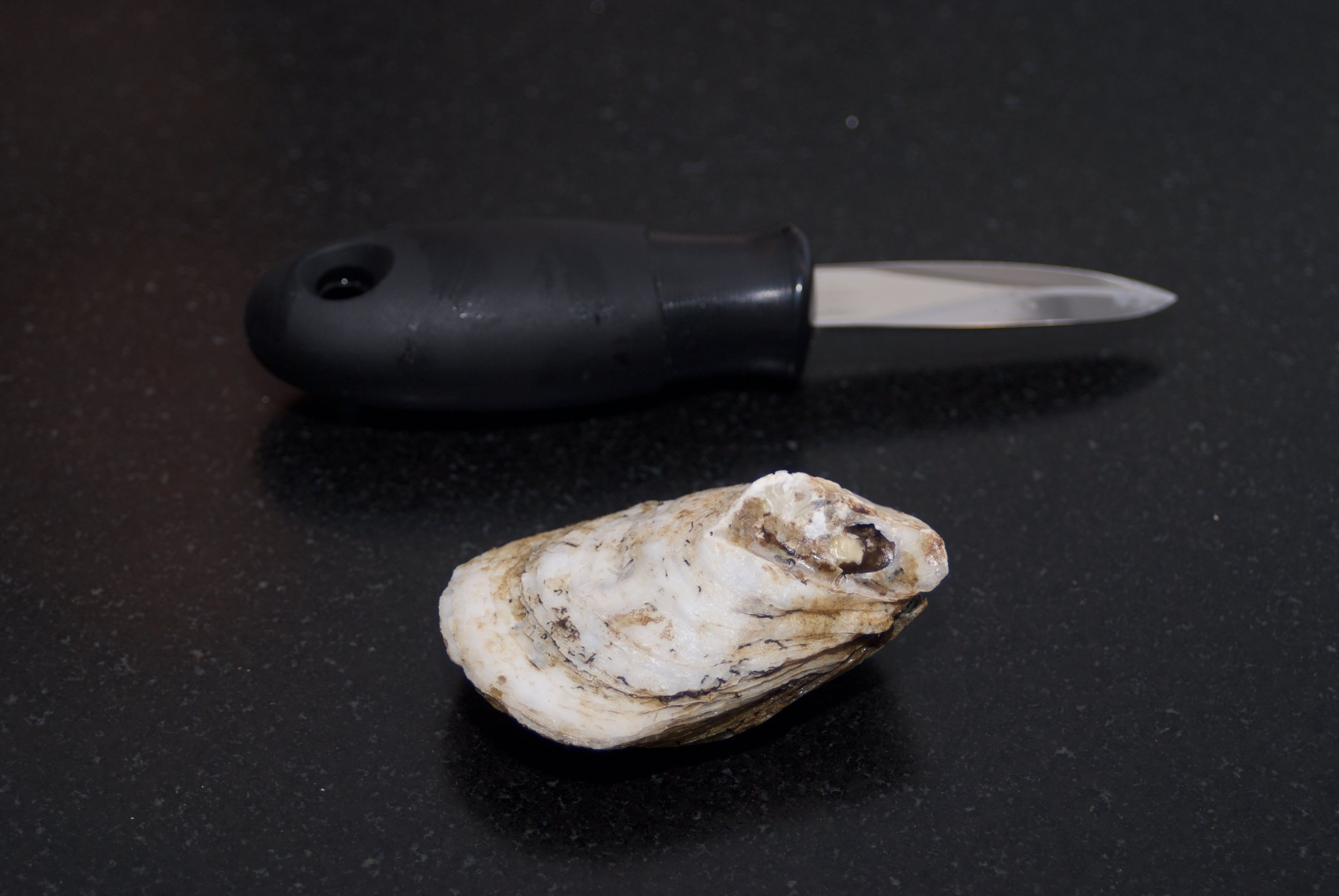 Tool of the trade - this oyster knife was $8 on Amazon and worked just fine, although I've seen way more expensive brands. The oysters here are Blue Points from Long Island and I was able to get them at my local fish market for $1/oyster. You're also going to need a hand towel.