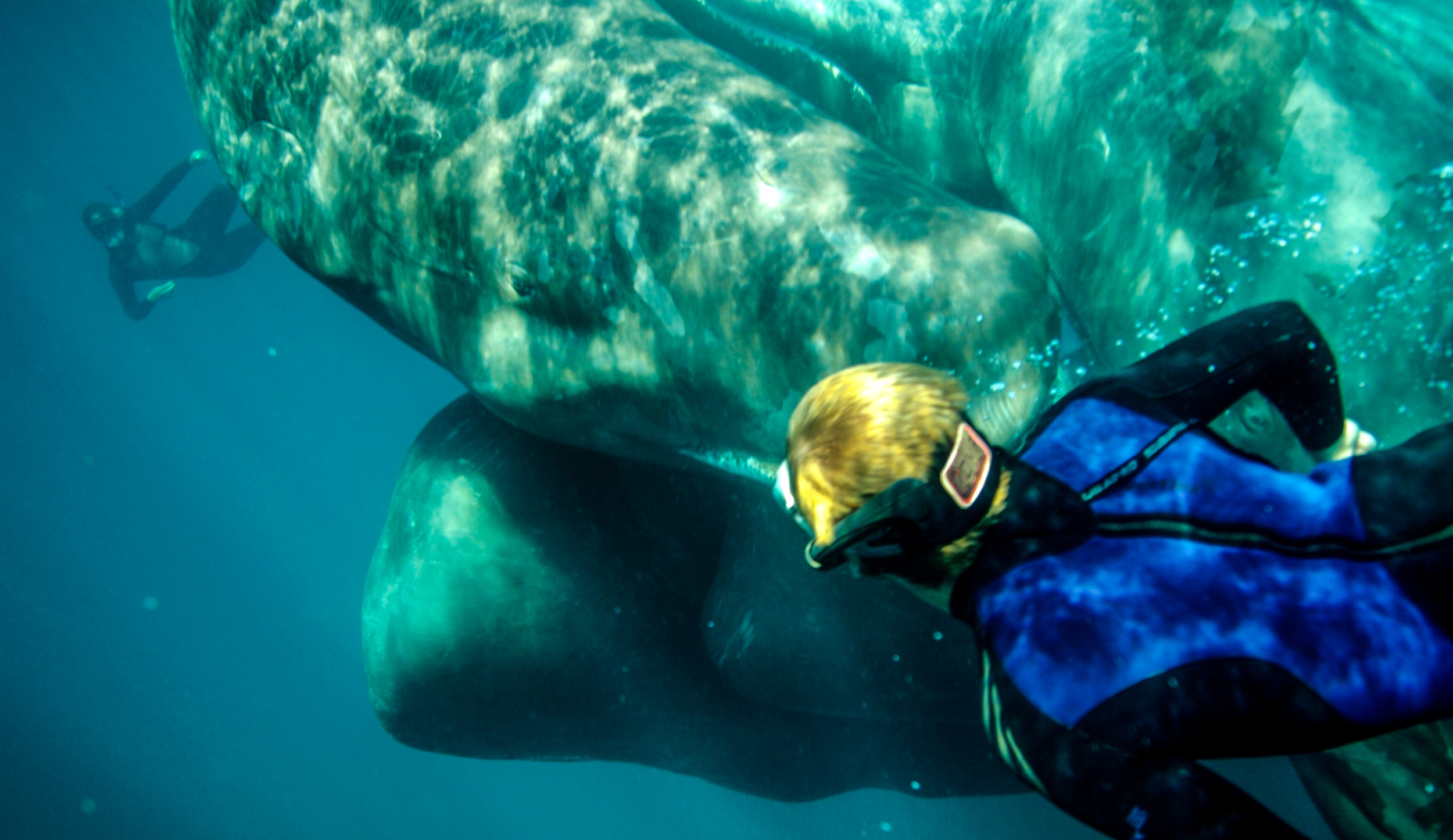 Cousteau and the Sperm Whale