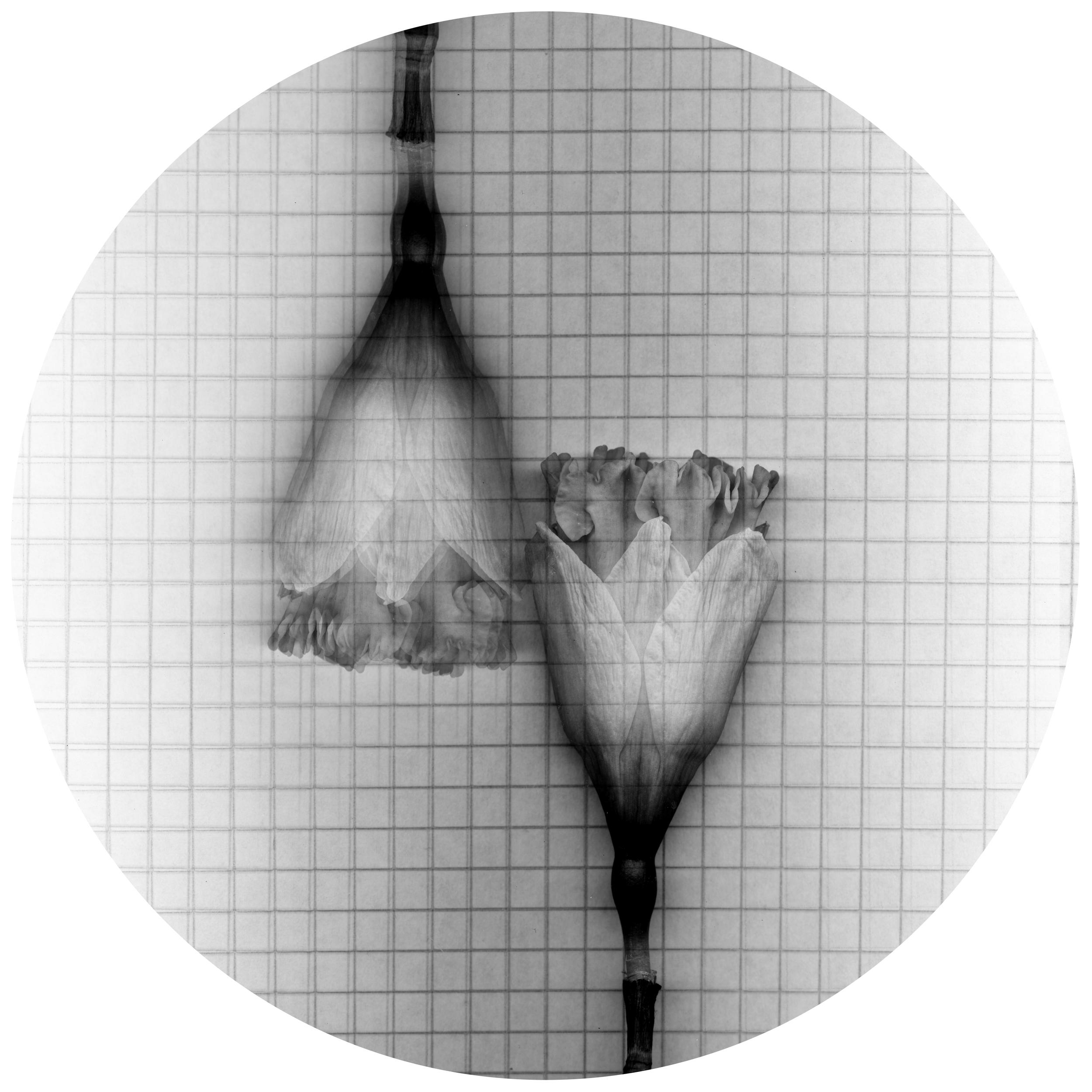 plantchaos4.jpg