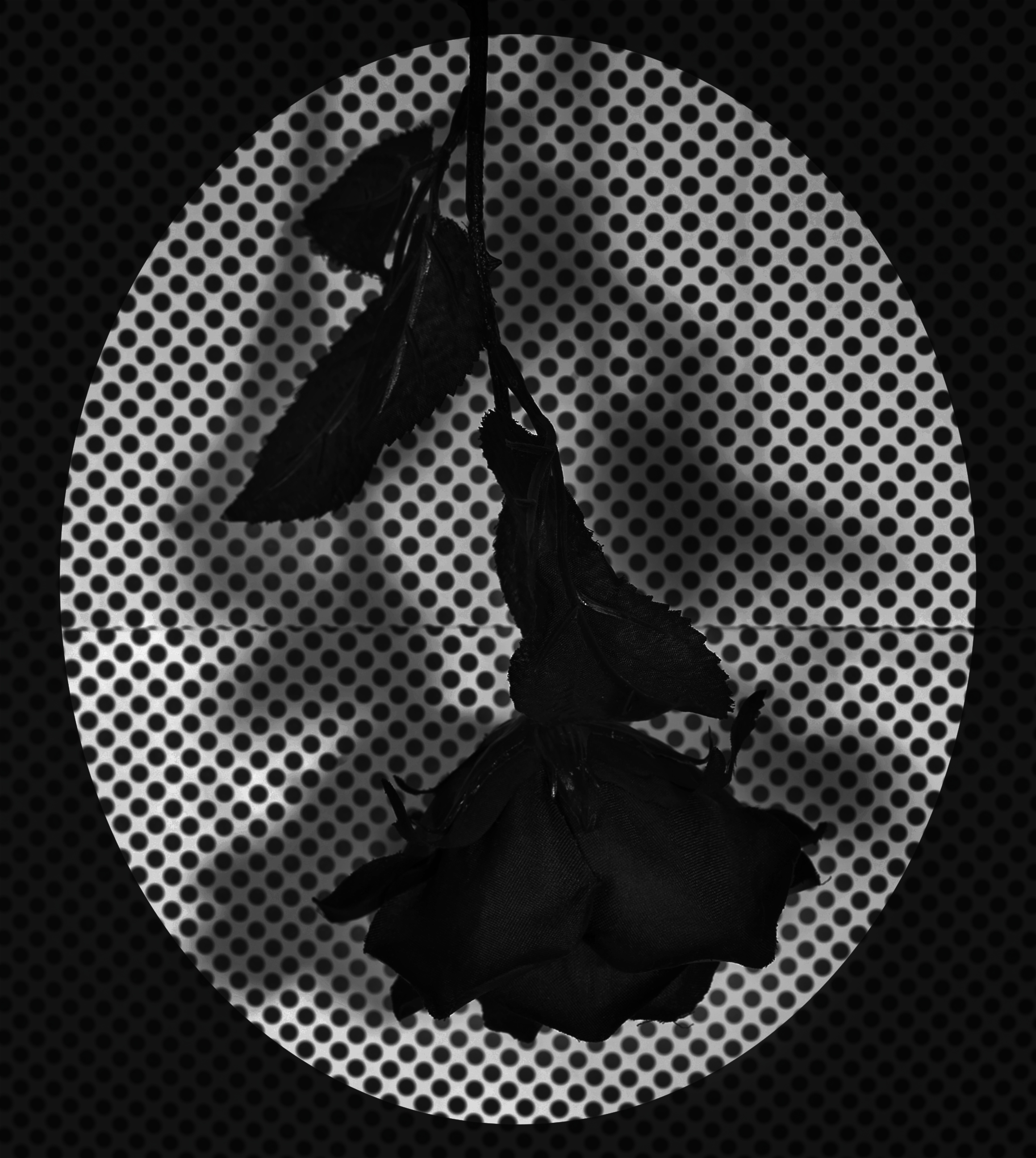 Fake Flower Study No. 3 from Mind Loop, 20 by 24 inches, Archival Pigment Print, 2018