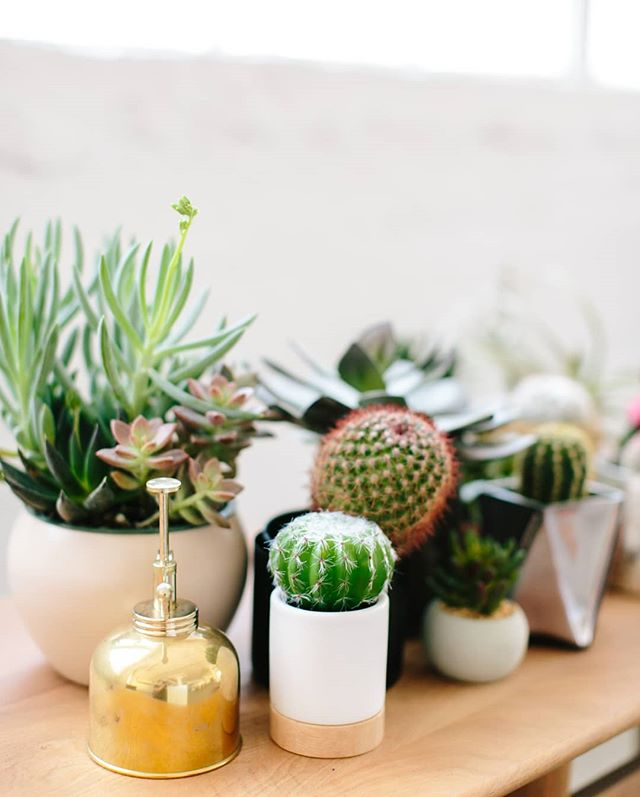 Fun fact: I don't  have a green thumb. 🌱🌱 I kill everything I've ever planted within a week and that is fine by me! 🌱🌱 If I did better with plants I would love having succulents scattered throughout the house. 🌱🌱 How about you? Do you have a green thumb? Got any tips for me?
