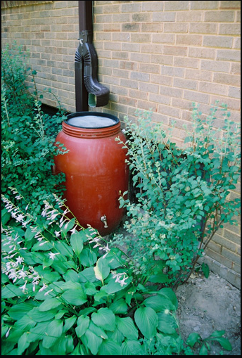 Click to learn more about rain barrels.