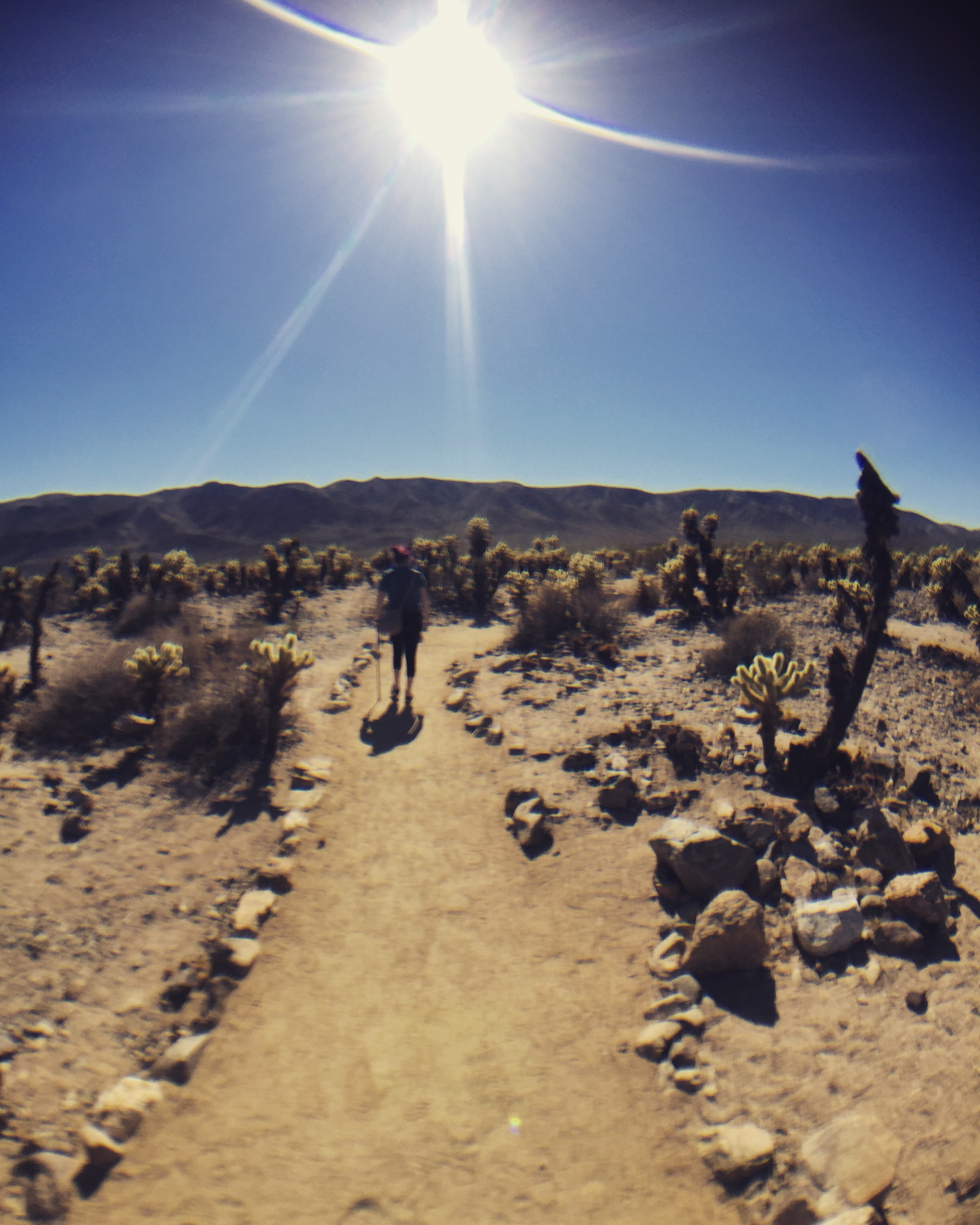 Heather walking with her cane in Joshua Tree National Park, 2016.