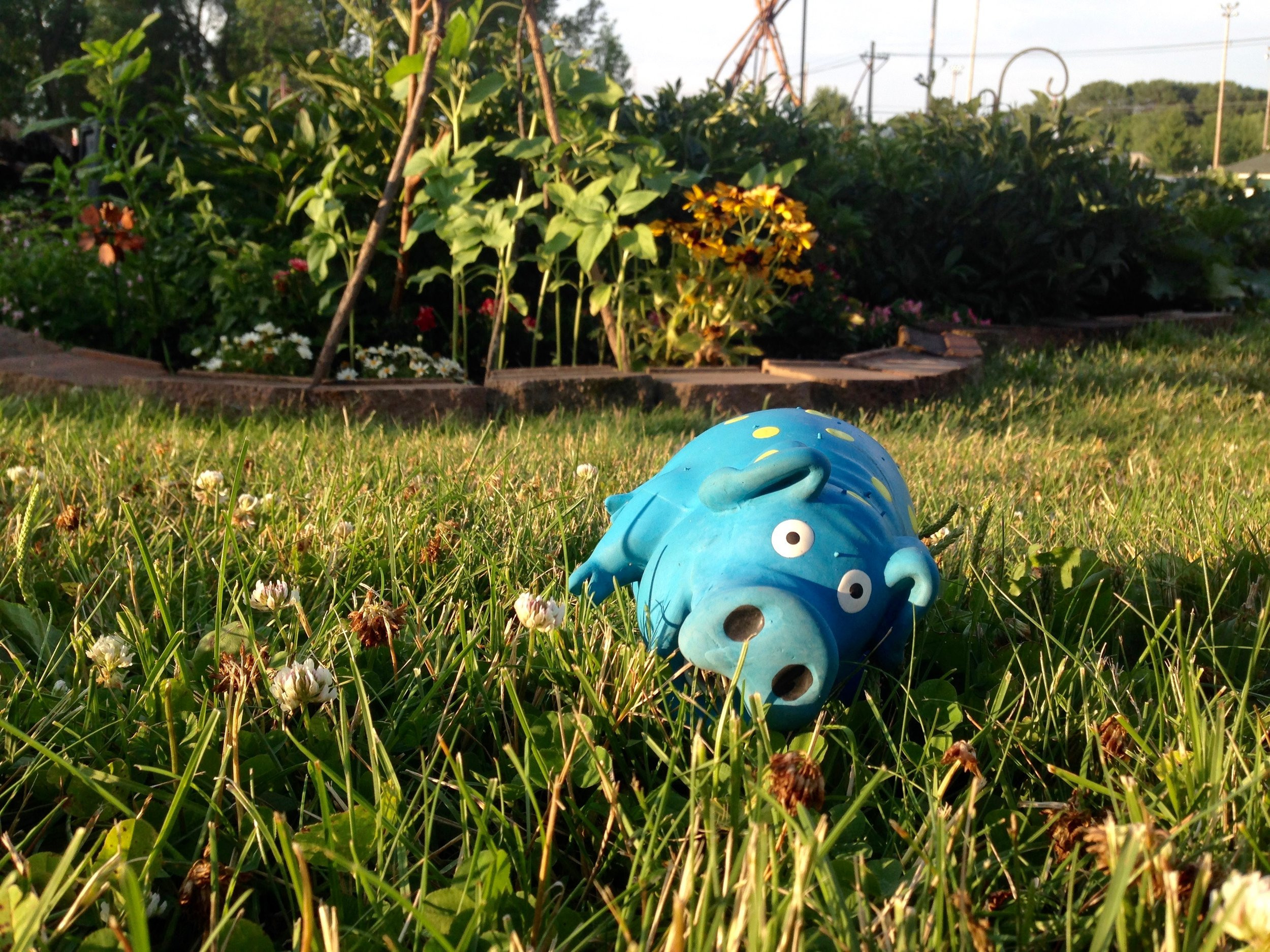 I found my dog's toy laying in yard one night, bug-eyed and squished on every side. I relate to this Mr. Pig toy most days. Don't most mamas?