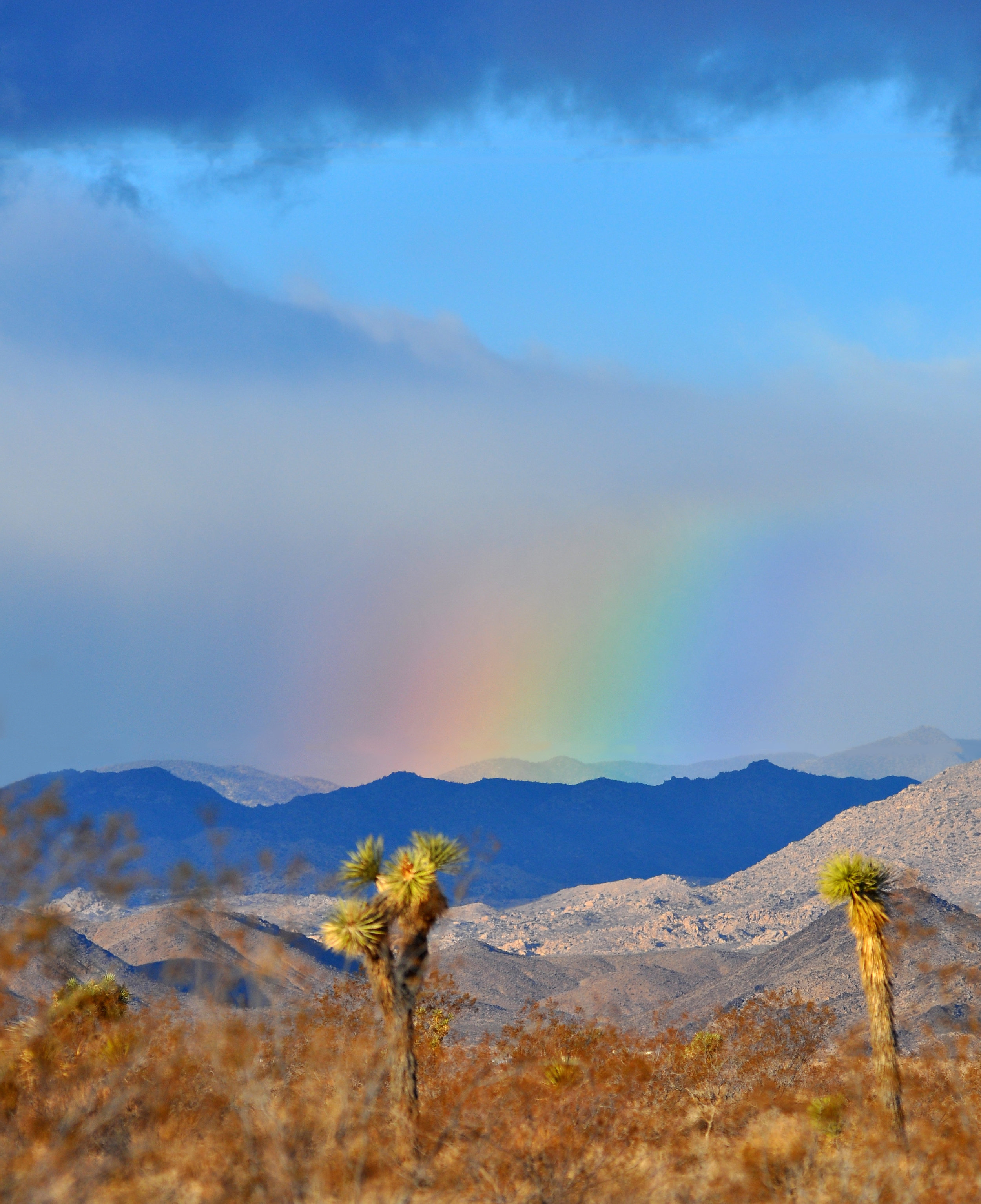A rainbow in the Mojave Desert from Landers, Ca; photo by Jessie Eastland via Wikimedia Commons.
