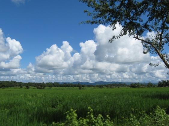 Green field on Saint Martin Island, Bangladesh; photo by  Tahmid Munaz