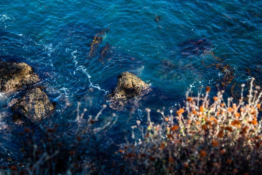 Point Lobos, Carmel, Ca; photo by Chad Woodward, November 2018.