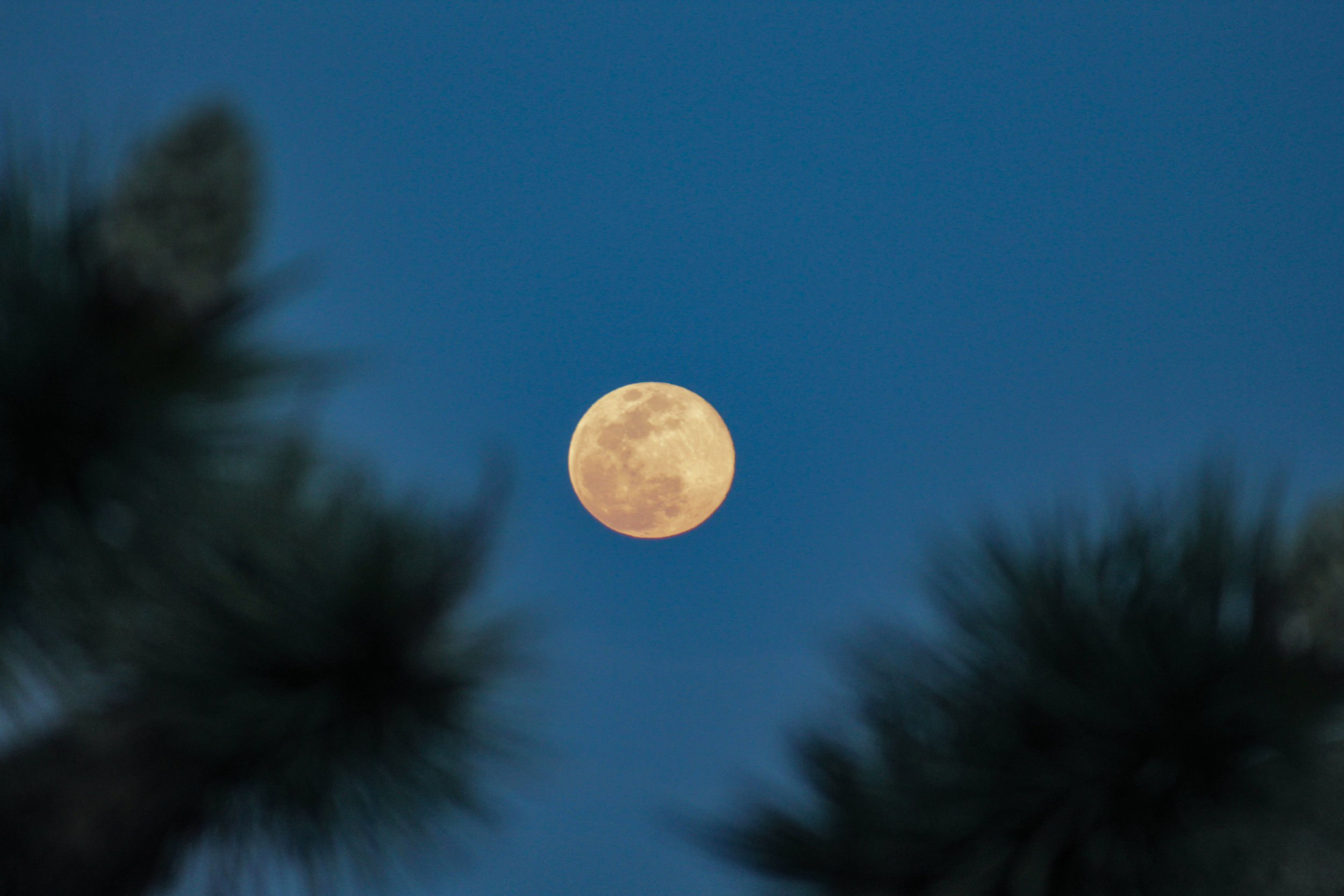 Spring Equinox Full Moon, Joshua Tree National Park, Ca; photo by Chad Woodward, March 2019.