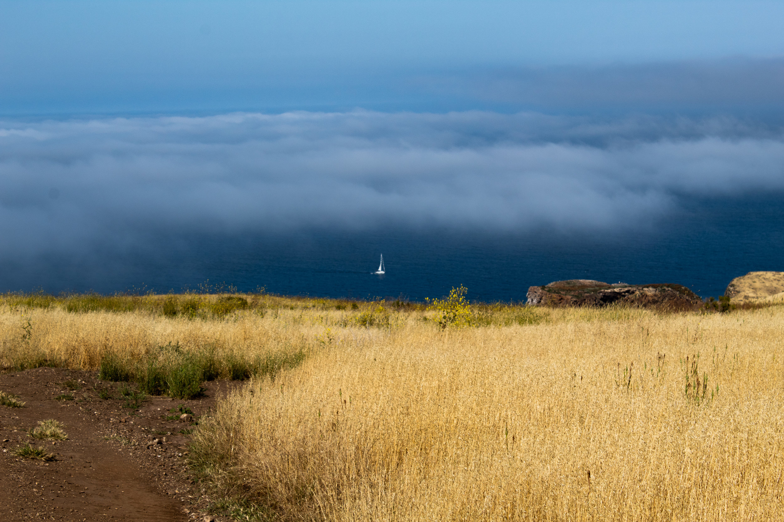 View from Smuggler's Road on Santa Cruz Island, Channel Islands National Park, May 2019; photo by Chad Woodward.