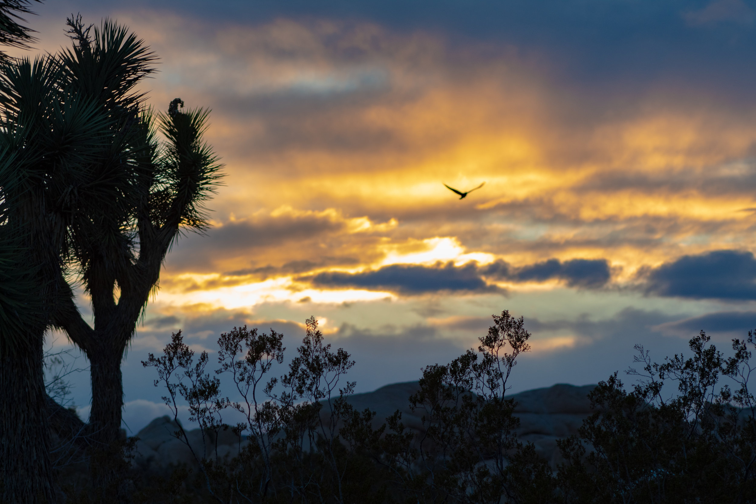 Sunset from Jumbo Rocks campground, Joshua Tree National Park, Ca; photo by Chad Woodward, March 2019.