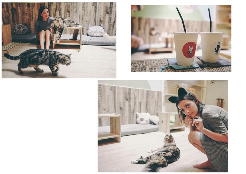 cat cafe, singapore - www.derrive.com