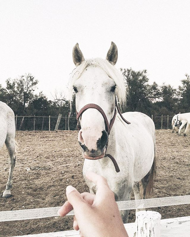 🐴☁️ #horse #saintesmariesdelamer
