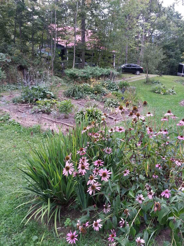 Patty's garden