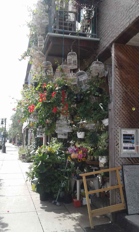birdcages, Montreal