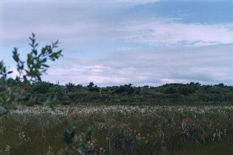 hannahpuechmarin-yuryagir-wildflowers-2.jpg