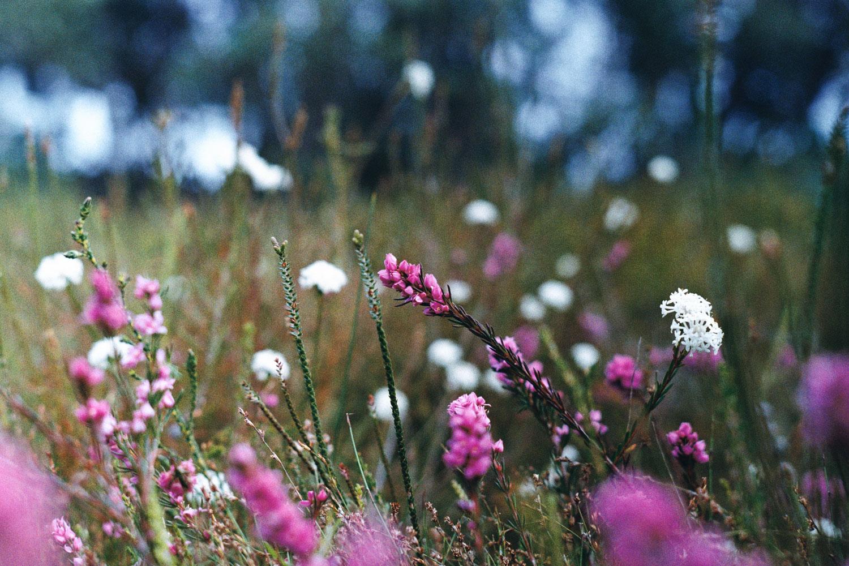 hannahpuechmarin-yuryagir-wildflowers-15.jpg